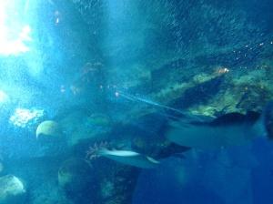Dubai Aquarium-Dubai Mall