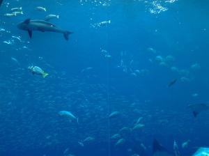 Atlantis Hotel Aquarium-Dubai
